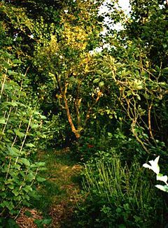 Fruit-tuin (zie wikipedia)