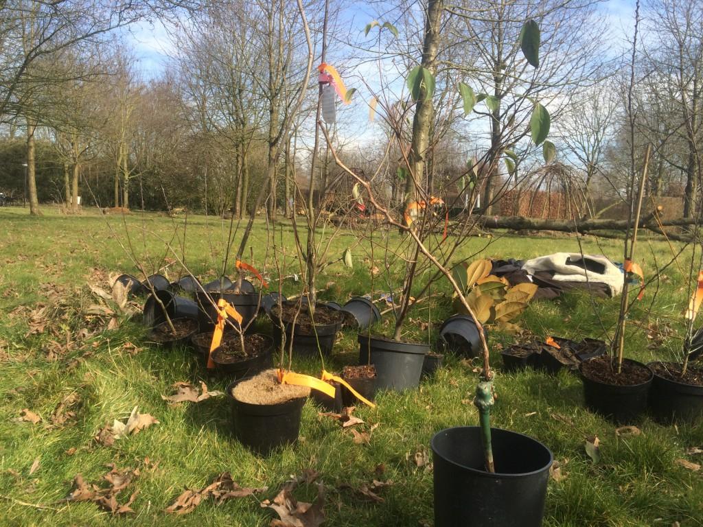 Fruitbomen en struiken van arborealis.nl