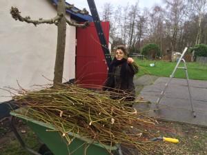 Gratis Workshop - Duurzaam Eten - Wintersnoei @ Duurzaamheidscentrum de Veenweide | Soest | Utrecht | Nederland