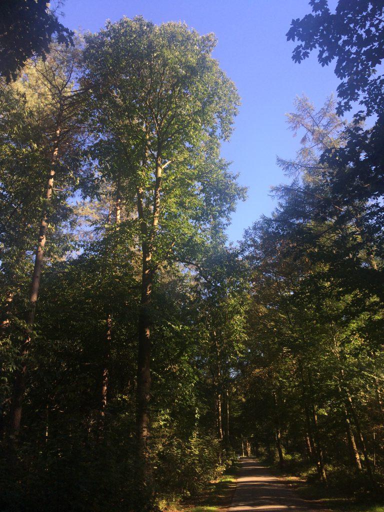 De eerste bolsters vallen eraf - hier een tamme kastanje bij de Bergjes in Soest - 27 september 2016.