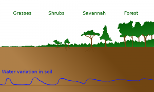 The soil can be an important water reservoir.