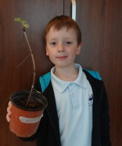 Erik is growing grape from a twig. (This is 2 months after planting)