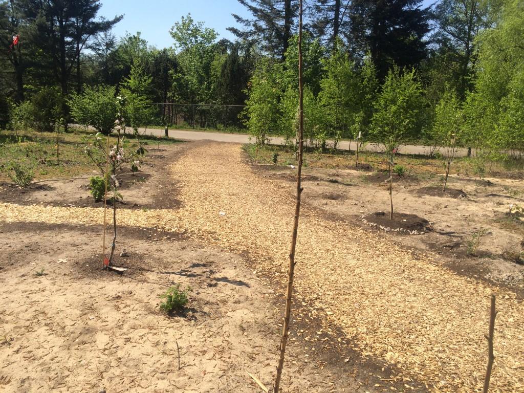 Het nieuwe looppad is korter en mooier dan voorheen - dwars door het fruitpark.