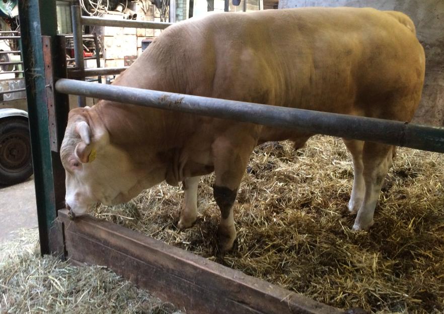Nieuwe stier: Joost van de Woestehoeve - misschien de liefste vader ooit?
