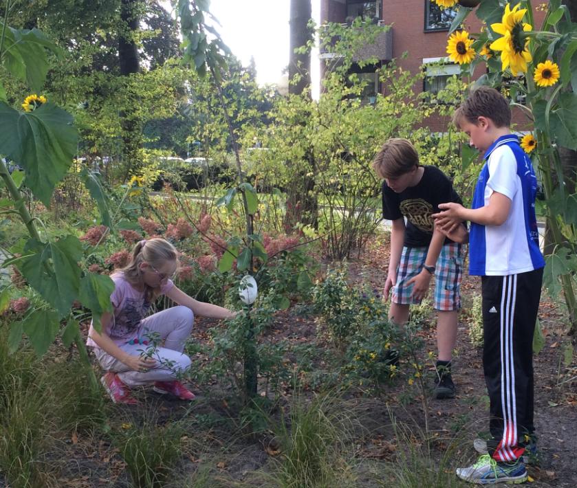 Eline plant de kersenboom met ondersteuning van Erik en Jonatan