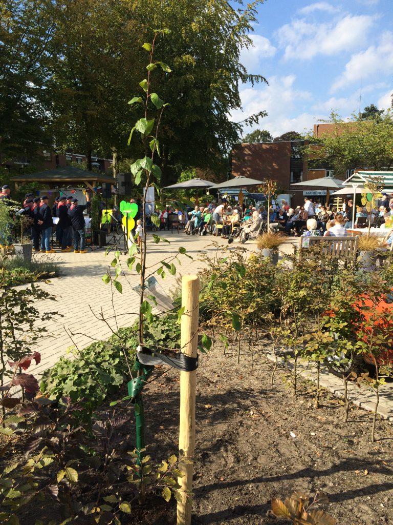 Pruimenboom 'Czar', met de burendagfeest als achtergrond.