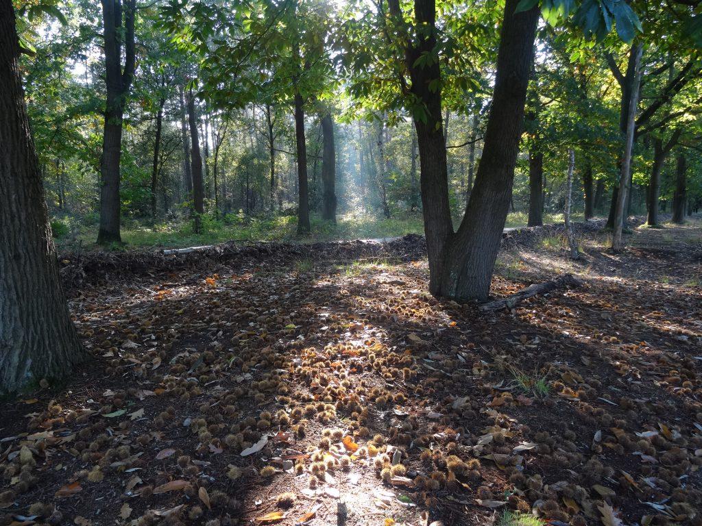 De bossen liggen vol lekkernijen...